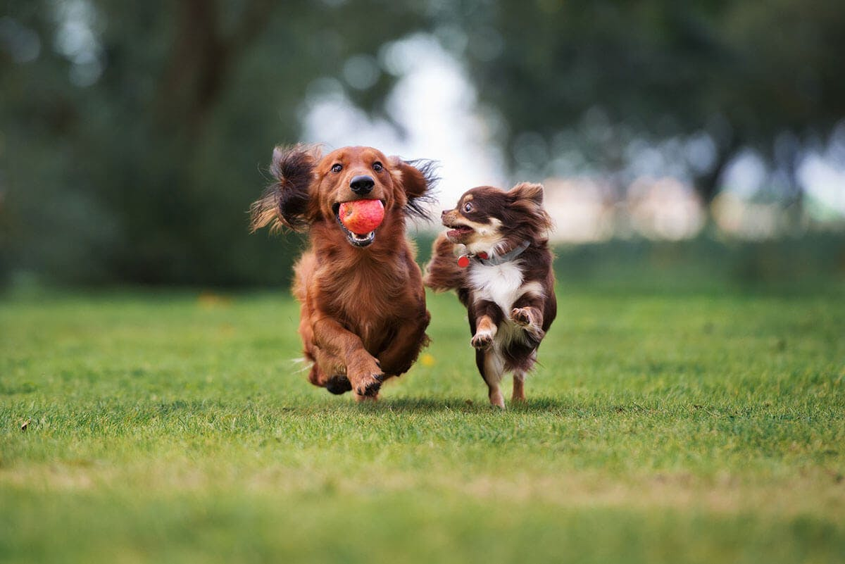 dog-parks-in-fort-bend-county-tx