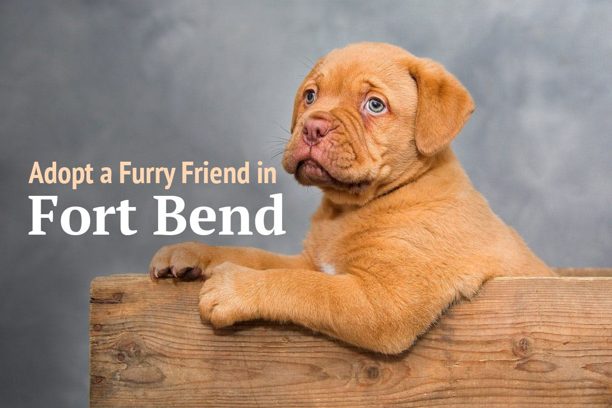 where-to-adopt-a-pet-in-fort-bend-county
