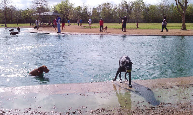 millie-bush-dog-park-fort-bend-tx