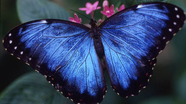 Butterfly-Habitat-Exhibit-Hall-Houston-Museum-Natural-Science