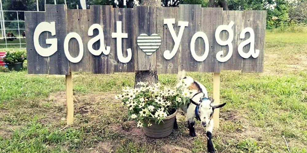 goat-yoga-fulshear-texas