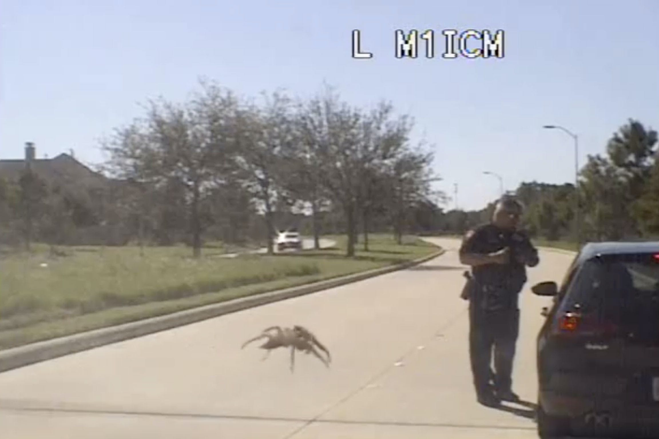fulshear-texas-police-big-spider-on-windshield